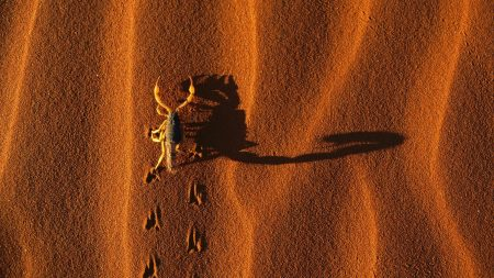 scorpion, insect, sand