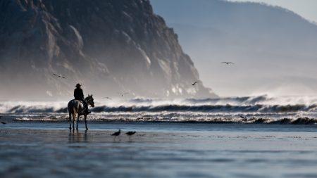 sea??, beach, horse