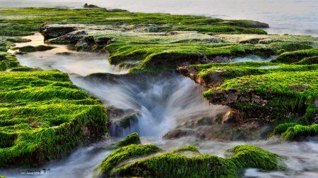 sea??, beach, moss