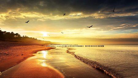 sea??, beach, nature