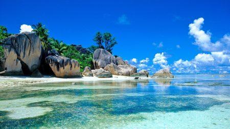 sea, palm trees, coast