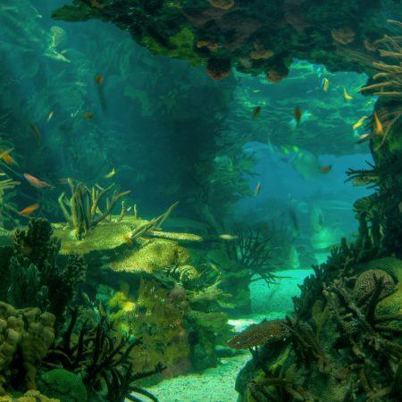 sea??, seabed, landscape