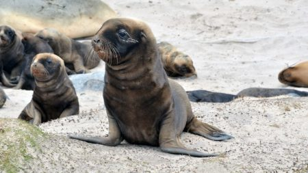 seal, pack, beautiful