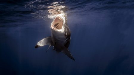 shark, sea, under water