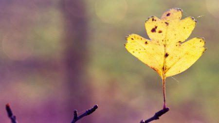 sheet, autumn, branch