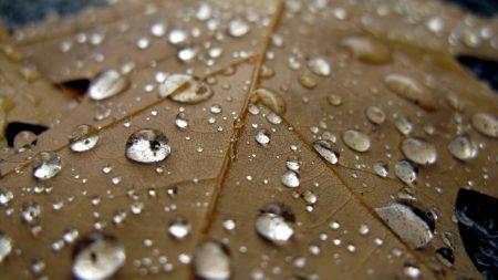 sheet, drop, close-up