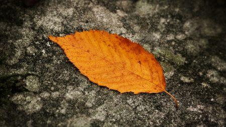 sheet, yellow, autumn