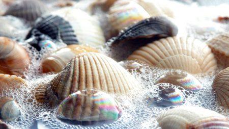 shell, foam, bright