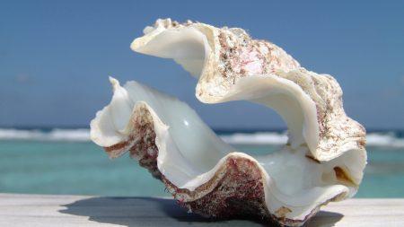 shell, sea, beach
