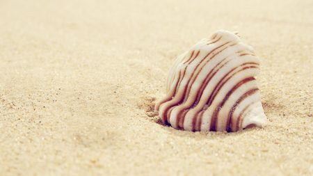 shell, striped, sand