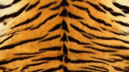 skin, tiger, stripes