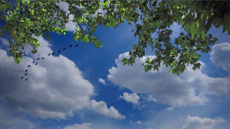 sky, birds, clouds