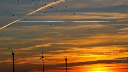 sky, birds, evening