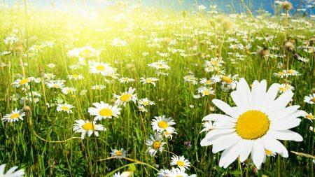 sky, light, flowers