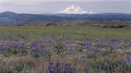 sleeping volcano, seismic zone, field