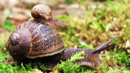 snail, couple, grass