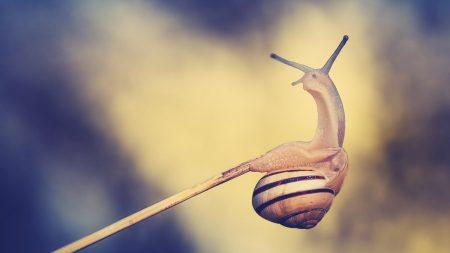 snail, grass, branch