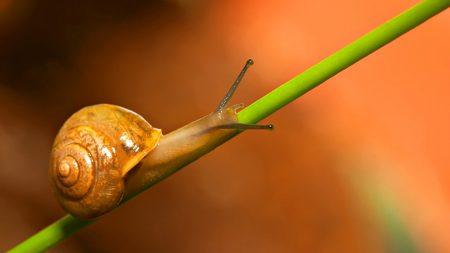 snail, grass, crawl