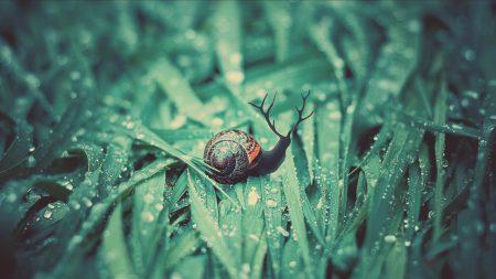 snail, grass, dew
