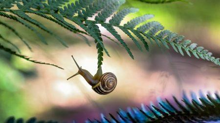 snail, grass, light