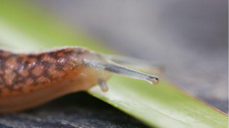 snail, head, antennae