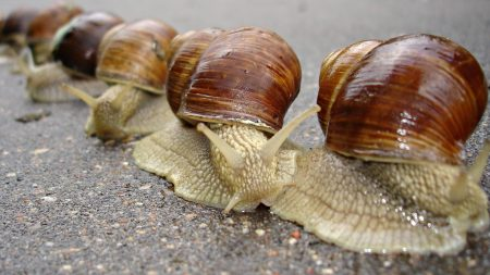 snail, shell, antennae