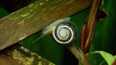 snail, wooden, boards