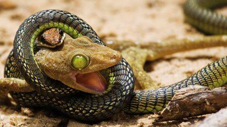 snake, choke, kill