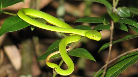 snake, leaves, green grass