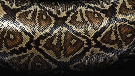 snake, scales, patterns