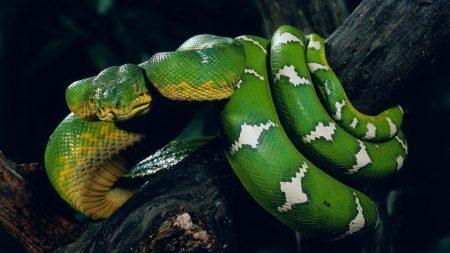 snake, tree, twist