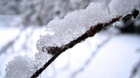snow, branch, white