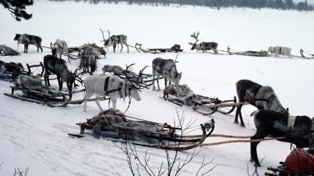 snow, deer, sledge