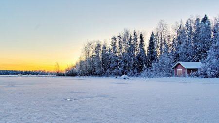 snow, field, trees
