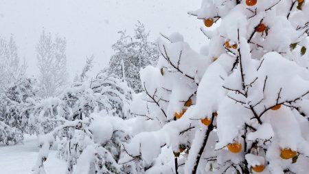snow, trees, anomaly