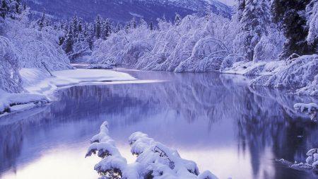 snow, white, winter