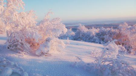 snow, winter, bushes