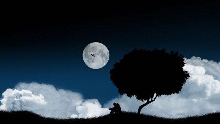 solitude, tree, night