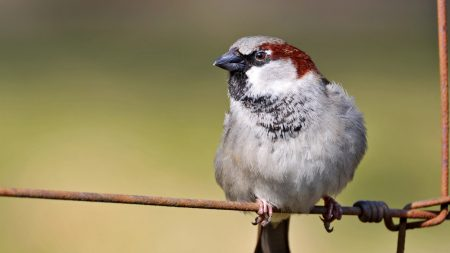 sparrow, bird, branch