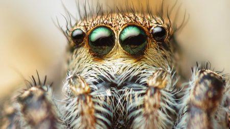 spider, eyes, hair
