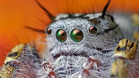 spider, eyes, hairy