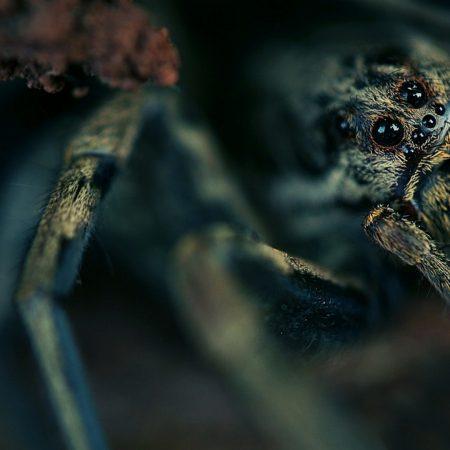 spider, eyes, hide