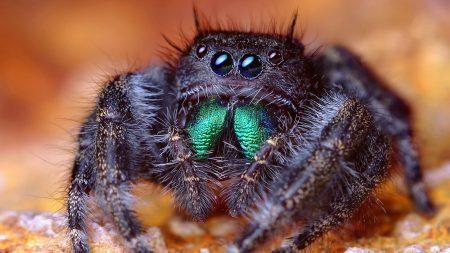 spider, eyes, legs