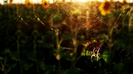 spider, flowers, light