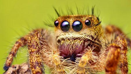 spider, legs, hairy