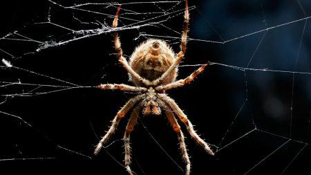 spider, legs, web