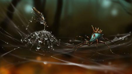 spider, web, dandelion seeds