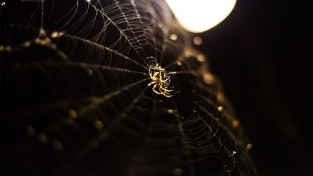spider, web, light