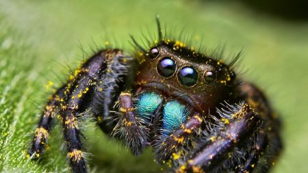 spiderman, scary, eyes
