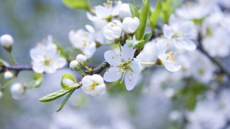 spring, branch, apple